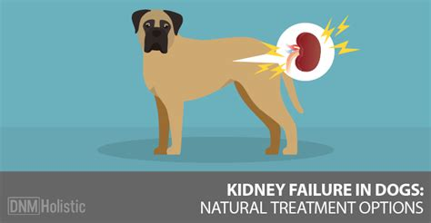 kidney failure in puppies all categories dnsinter