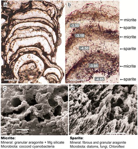 sparite thin section life free full text caco3 precipitation in