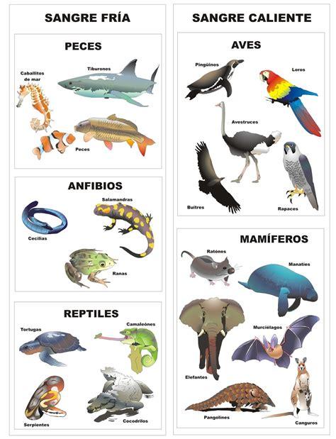 imagenes animales vertebrados e invertebrados para imprimir imagenes de animales vertebrados e invertebrados para