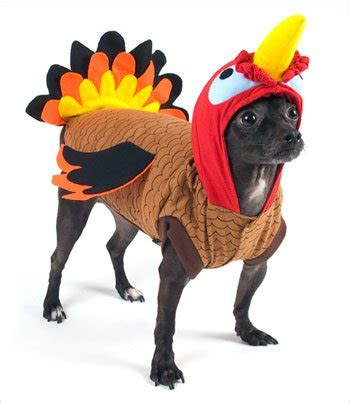 turkey for dogs 4 thanksgiving costumes for dogs that will make you smile wit whimsey