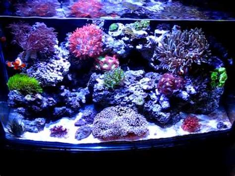 Saltwater Aquascaping 22g Reef Tank Under Led Lighting Atlantis Aquarium Net