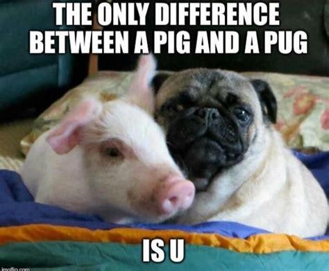 pug child meme 25 best ideas about pug humor on pugs pug puppies and a pug
