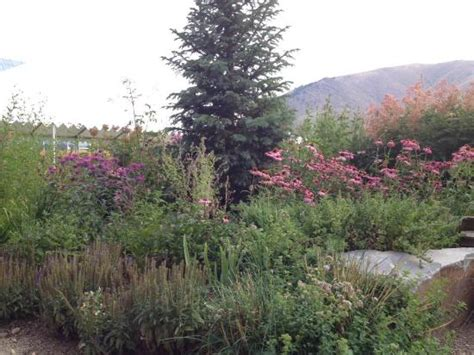 Sawtooth Botanical Gardens Photo0 Jpg Picture Of Sawtooth Botanical Garden Ketchum Tripadvisor