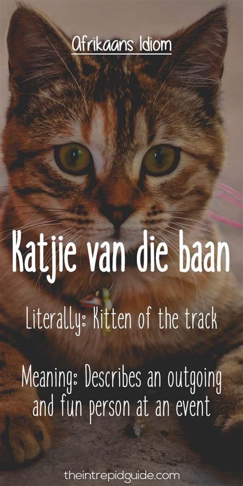 hilarious afrikaans idioms   exist  english