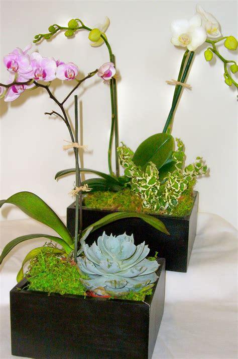 orchid plant flowers orchids plants ucla health