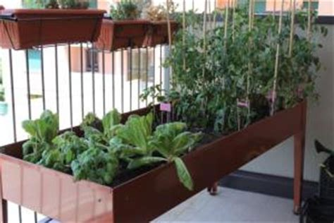 come fare l orto sul terrazzo come fare un orto sul terrazzo coltivare orto in terrazza