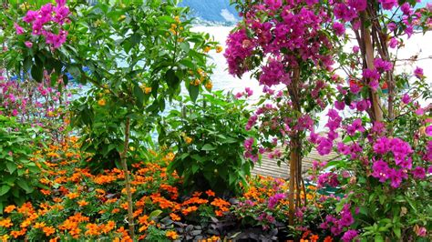 Garden Flower Photos Flower Garden Wallpaper Free Http Refreshrose