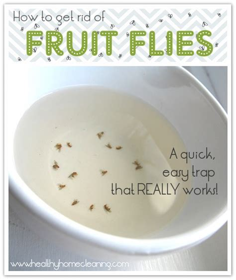 why are fruit flies in my bathroom how to get rid of fruit flies pesky little things
