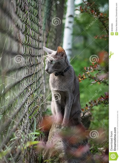 Cats Sitting On A Fence Wishing Iphone Semua Hp royalty free stock photo cartoondealer 90602997