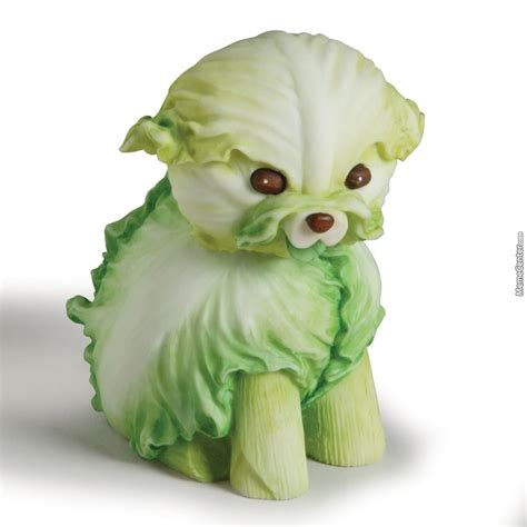 cabbage for dogs cabbage by theflyingcabbage meme center