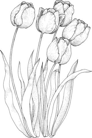 Butterfly Chair Frame Four Tulips Coloring Page Free Printable Coloring Pages