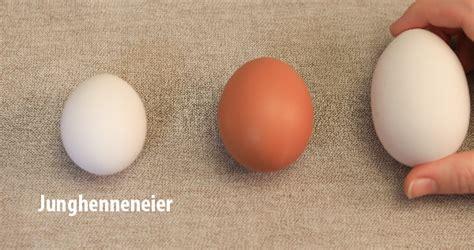 wann sind eier abgelaufen junghenneneier frische eier jungen h 252 hnern