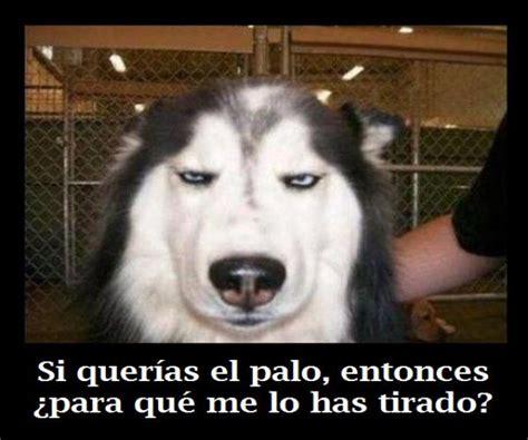 imagenes graciosas de cumpleaños de perros frases graciosas con imagenes de animales buscar con