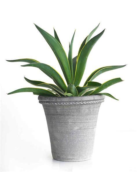 100 houseplants for low light easy houseplants that 100 houseplants top 5 most rewarding houseplants for