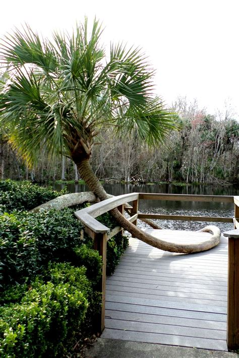 glass bottom boat tours silver springs florida 17 best images about silver springs on pinterest spring