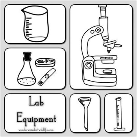 Dr P Basic Type L 8 lab equipment clipart pictures of botany tools