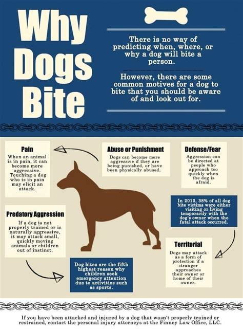 why do dogs bite aggression what to do with an aggressive and stop an aggressive behavior