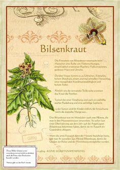 heilkräuter aus dem garten gottes 1000 bilder zu giftpflanzen auf ranunkel