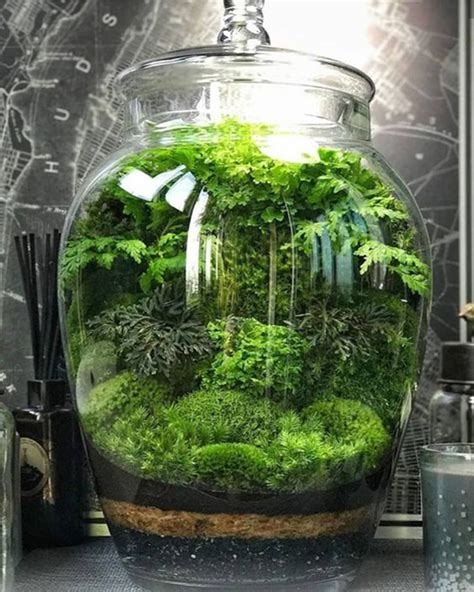plants   grow   jar