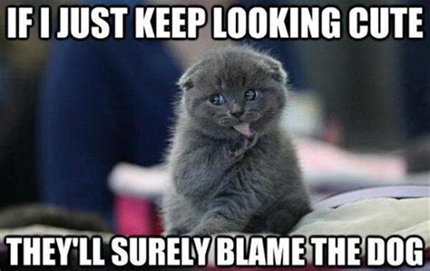 Cutest Animal Memes - lol cats 50 awesomely funny cat photos to crack you up
