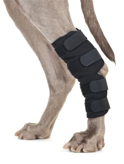 acl brace for dogs knee brace for dogs hock protector acl therapeutic rear leg 4 straps s to l ebay
