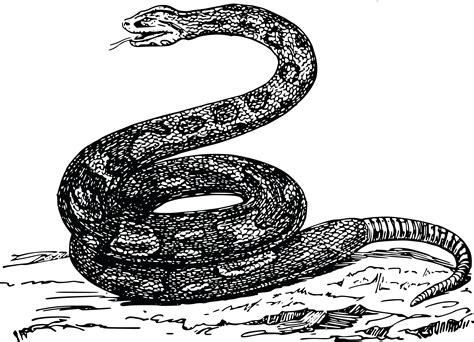 rattlesnake clipart rattlesnake clipart small snake pencil and in color