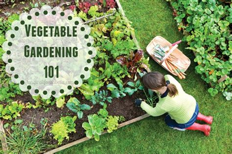 Vegetable Garden 101 Getting Started Vegetable Gardening