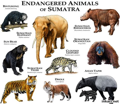 Endangered Animals Pictures And Their Names