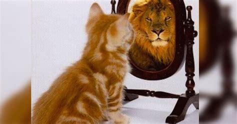 imagenes de leones y gatos estudio revela que tu gato podr 237 a asesinarte porque se