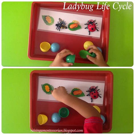Water Hydrogel Sensory Play raising a montessorian