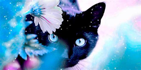 imagenes en movimiento para twitter portadas para twitter cabeceras para twitter de animales