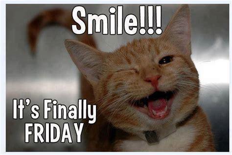 Friday Cat Meme - friday micritterchitter