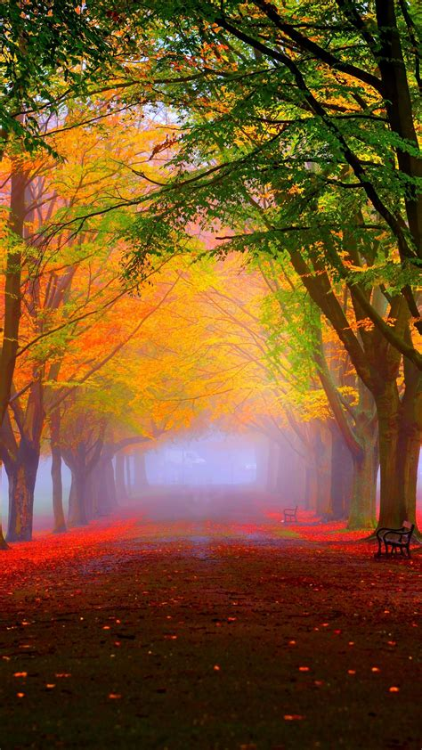 Wallpaper park, 5k, 4k wallpaper, 8k, autumn, beautiful ... Mint Leaves Wallpaper