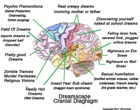 brain diagram lobes interpretation offers opportunity the