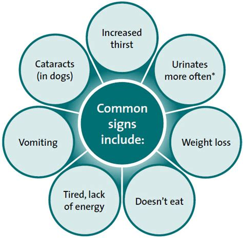 diabetes in dogs symptoms diabetes in dogs symptoms types diagnosis treatment complications
