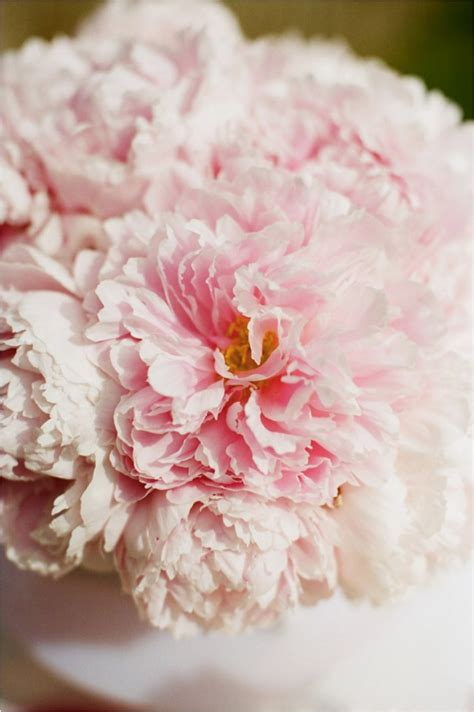 pink peonies wedding summer peony wedding inspiration onewed