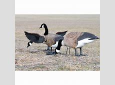 Higdon Finisher Flapper Full Body Canada Goose Decoy ... Goose Hunting Rifle