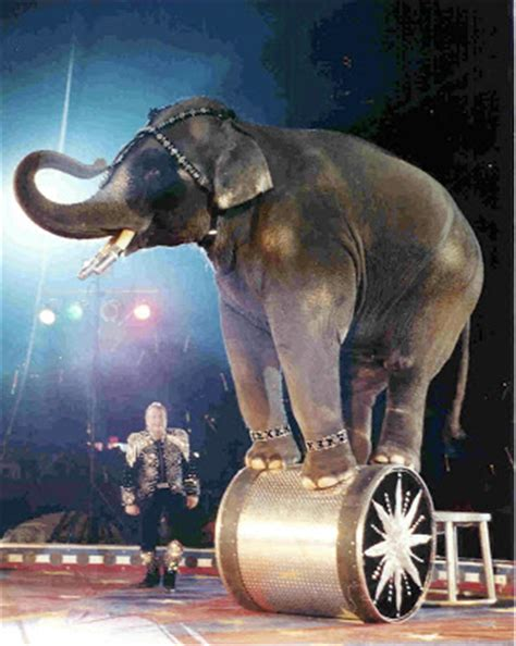 Circus Elephant Rage Strong Is The New Don T Be A Circus Elephant