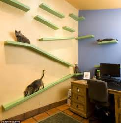 design works home is where the cat is the man who turned his house into a feline fantasy builder creates utopia for his 14 cats