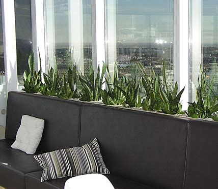 Living Decor Hire Plants Whangarei Green Indoor Plant Design Services In Sydney Central