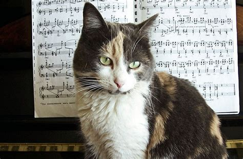 cat song do cats prefer classical the purrington post