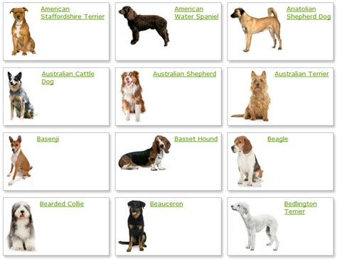 all different dogs all list of different dogs breeds breeds list with picture