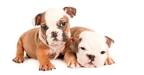 different of dogs what 17 different breeds of dogs look like at 6 weeks 171 twistedsifter