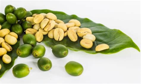 Green Coffee Bean green coffee bean extract vs garcinia cambogia for weight loss a comparison