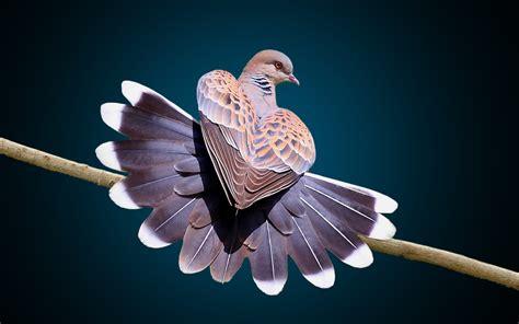 Home Celebration Home Interior by Beautiful Bird Dance Amazing Feather Beautiful Hd Wallpaper