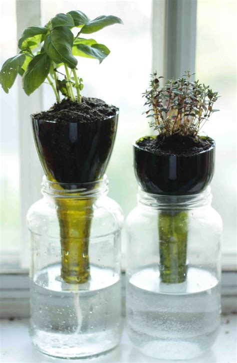 Self Water Planter by Projectiles Self Watering Glass Planters