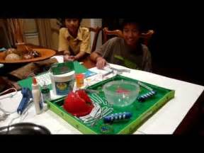 How to make a 3d plant cell model project youtube