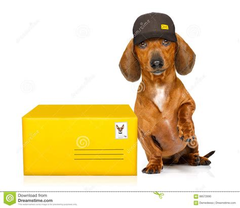 puppy delivery mail delivery post royalty free stock image cartoondealer 69538858