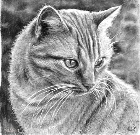 30 Beautiful Cat Drawings Best Color Pencil Drawings And Drawing Top Beautiful Color Images