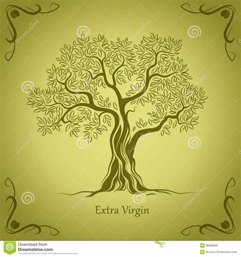 Olive Tree Olive Oil Vector Olive Tree For Labels Pack Stock Vector Image 36086808 Vintage Family Tree Royalty Free Stock Images Image 32018779